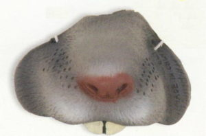 a-24728 mouse nose